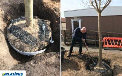 Tree Planting at Twynham School, Christchurch