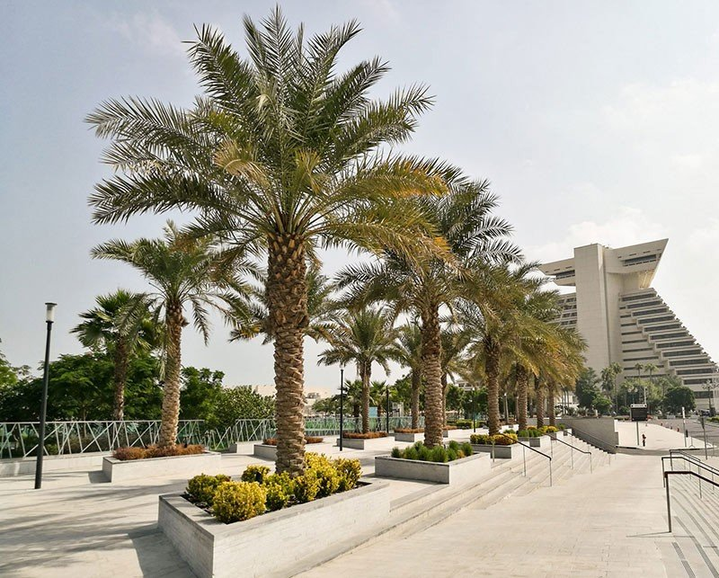 Sheraton Park, Doha - Qatar - Palm installed with Platipus Rootball Fixing Deadman Systems