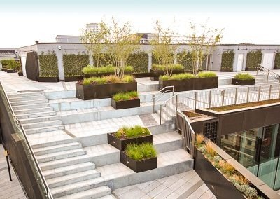 Post Building - trees planted into conatiners on roof of building