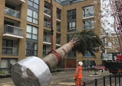 Packington Estate lowering palm
