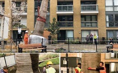 Large Palm Tree Installation – Packington Estate, North London