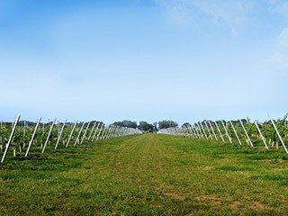 Vineyard Anchoring by Platipus Earth Anchors Example