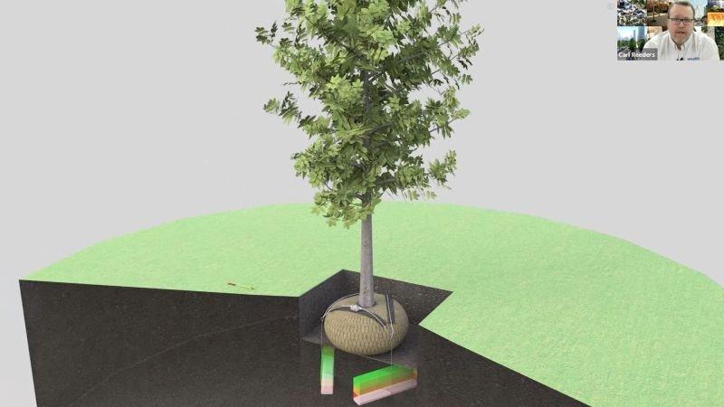 tree-anchoring-system-deadman